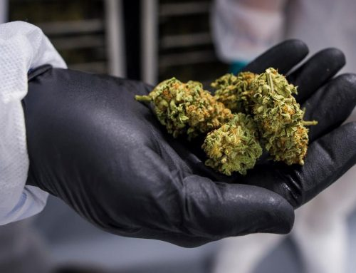 Scientists Believe Cannabis Could Help Treat & Prevent Coronavirus